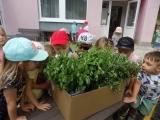 Jak využít bylinky ze školní zahrady?